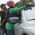 Adventszeit: Wie transportiert man einen Weihnachtsbaum richtig?